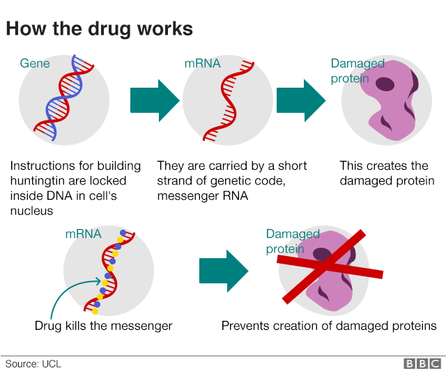 How the new drug for Huntington's works