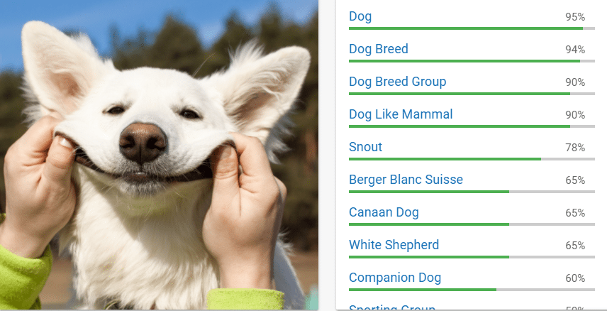 Picture of Google's cloud vision API correctly detecting an image of a smiling dog