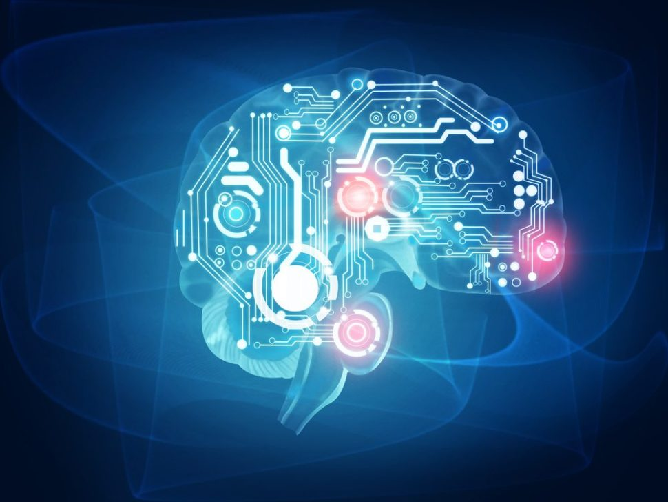 Online citizen science has made leaps and bounds in recent years. Now, researchers have teamed up with gamers to generate a digital database of neurons in the human brain   Image by Carlos Amarillo   Shutterstock