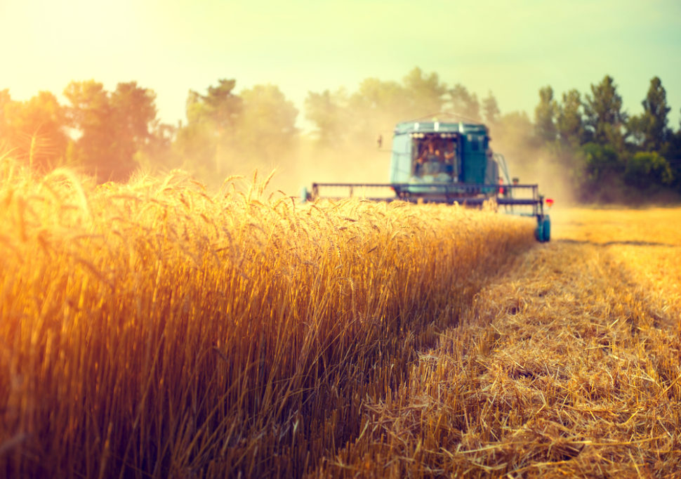 Nitrogen is one of the most central elements in our modern agricultural processes. Now, experts claim that our nitrogen extraction methods are contributing to climate change. | Image by Subbotina Anna | Shutterstock