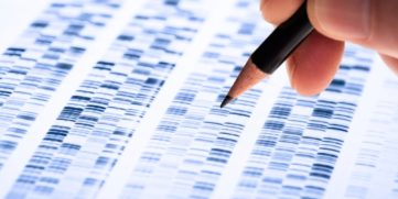 Researcher studying a DNA map