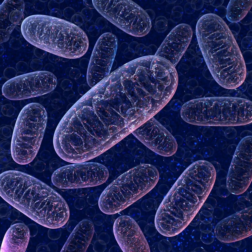 Mitochondria, along with being the powerhouse of the cell, may now provide new clues into how evolution can occur in isolated species. | Image By 3d_man | Shutterstock