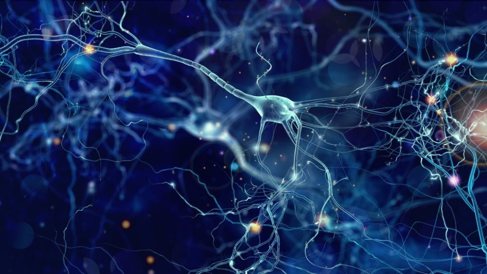 New research in synaptic plasticity could shed light on how our brain works. | Image By whitehoune | Shutterstock