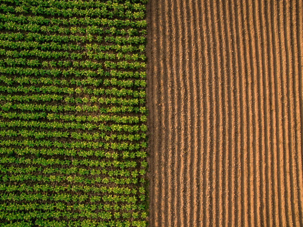 Gene-edited crops might provide billions of people with sustainable nutrition. But will consumers accept them? | Image By Thongsuk Atiwannaku | Shutterstock