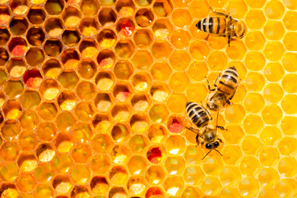 In a surprising study, researchers discovered that bees can perform basic math. | Shutterstock