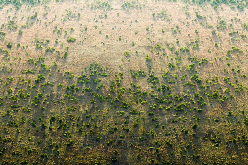The great green wall is one of the most ambitious projects of modern times, and it's already well under way. ¦ Image via the Great Green Wall Organization